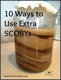 10 Ways to Use Extra SCOBYs | Fermentools.com