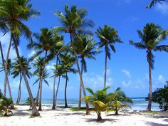 Drop Everything To Read About This Amazing Private Island In The Bahamas Beautiful Islands, Beautiful Beaches, Beautiful Landscapes, Beautiful Gardens, French West Indies, Bahamas Island, Villa, Caribbean, Palm Trees