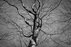 Baum, Baum Oben, Stamm, Zweig, Winter Baum, Kahler Baum