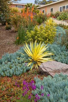 Xeriscaping- drought-tolerant plants, Yucca 'bright star', chalkfingers, red hot pokers and cone bush (Leucadendron in the center) Front Yard Low Water Landscaping, Succulent Landscaping, Landscaping Plants, Succulents Garden, Landscaping Ideas, Desert Landscaping Backyard, Dry Garden, Water Garden, Gardens