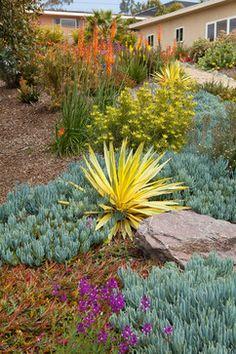 Blooms of Color! mediterranean landscape