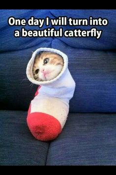 This is so funny the cat is trying to act like a butterfly well actrelly the kitten was fully acting like a real butterfly but the cat went in the sock so that it can be a catterfly but it was actually trying to act like a butterfly.                     PARTY POOPER YAY  THERES A                PARTY POOPER