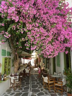Alley with coffee shop under the shade of a tree with flowers in Parikia village, Paros island, Cyclades, Greece Oh The Places You'll Go, Places To Travel, Wonderful Places, Beautiful Places, Gazebos, Paros Island, Greece Islands, Photos Voyages, Greece Travel