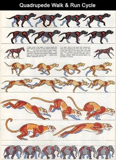 Ciclos de animação
