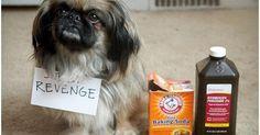 Cualquiera de estas tres opciones que elijas te ayudará a eliminar olores a perro y manchas por orina, heces y demás