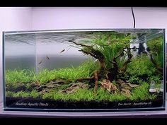 "Aquascape - ""New Beginnings"" - Step by Step - Aquascaped by Dan Harris #PoweredByAnubias - YouTube"