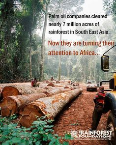 The world's second largest rainforest is under threat, join the fight: http://www.rainforestfoundationuk.org/palmoil