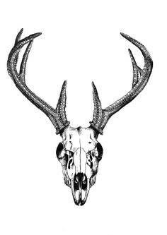 Deer Skull, A4 - Buy at ArtRebels.com