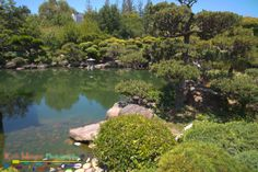 Japanese Tea Garden Pond_HDR6