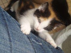 Kitten Janice