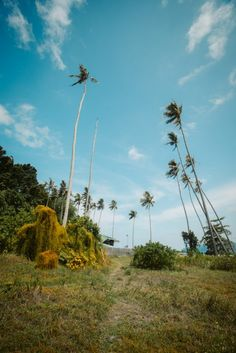 Full guide to the Bohey Dulang day trip on a Tun Sakaran Marine Park Island Hopping trip. All you need to know about the Semporna Islands. Semporna, Day Trip, Wind Turbine, Island, Park, Plants, Islands, Parks, Plant