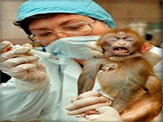 NO MALTRATO Y MATANZA ANIMAL!!!: ¿POR QUE CONTINUAN LOS EXPERIMENTOS CON ANIMALES?
