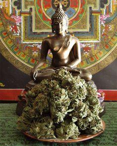 Buddha & Ganja.  #The best seeds #http://www.spliffseeds.nl/silver-line/blue-berry-seeds.html