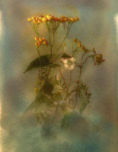 weeds by Viacheslav Krasnoperov on 500px