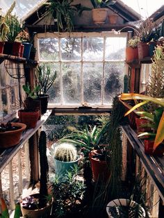 My Bohemian Life Scarborough Fair, Garden Of Earthly Delights, Plants Are Friends, Recycled Garden, Plant Information, Living On The Edge, Perfect Plants, Conservatories, Succulent Terrarium
