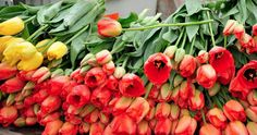 Colors of Life - Der Frühling und Frühsommer explodiert in unendlich vielen Farben #summer #spring #color #flower #tulip #frühling #blume #tulpe #uwebwerner