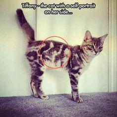 Inception kitten.