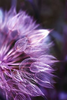 """Burning in purple...."" by Ewa Ciebiera"