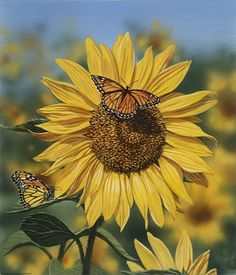 William Vanderdasson Sunflower/Butterflies - - Adelgiese Make-Up Ideen - Easy Recipes Sunflower Garden, Sunflower Art, Sunflower Iphone Wallpaper, Sunflowers And Daisies, Sun Flowers, Sunflower Photography, Sunflower Pictures, Butterfly Wall Art, Flower Aesthetic