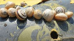 #snails, #design, #cadiz