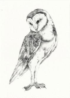 This 7 card features a digital reproduction of an original Ballpoint Pen drawing. Printed on crisp 100 lb card stock. All cards come with a corresponding envelope in a clear plastic sheath for protection. Made in Vermont. Bird Drawings, Animal Drawings, Cool Drawings, Animal Sketches, Art Sketches, Owl Sketch, Stippling Art, Photo Animaliere, Owl Print