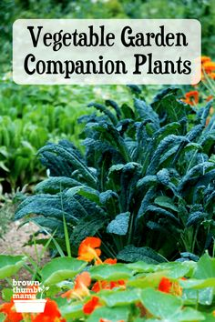 Keep your garden healthy by adding companion plants that keep insects and pests away! Click through to get your printable chart. #gardening #organicgardening #companionplanting Diy Garden Bed, Raised Garden Beds, Garden Ideas, Growing Herbs, Growing Vegetables, Gardening For Beginners, Gardening Tips, Vegetable Gardening, Organic Gardening