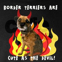 Border Terriers are cute as t T on CafePress.com