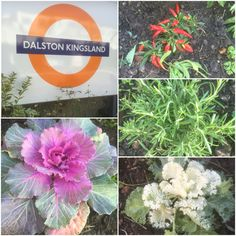 Freshly-grown patch of #plants at #DalstonKingsland #Overground #station. And are those red #chillies in #autumn? #awesome #burrough #dalston #e8 #fall #hackney #herbs #london
