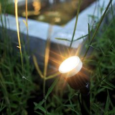 in-lite: Big Scope Hue, Dandelion, Lights, Garden, Flowers, Plants, Outdoor, Patio, Taps