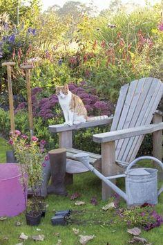 Rośliny zimą : Weranda Country ..........a cat in the garden...ever vigilant...