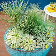 Cool hues - Container Designs with Succulent Plants - Sunset