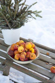 Kälke, vinter  Hildas hem: En vinterbuffé med äpplen