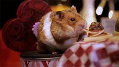 Der #Valentinstag steht vor der Tür, und obwohl wir wirklich nicht viel davon halten, sind wir bei diesem Video einfach weich geworden. Die beiden #Hamster haben wirklich an alles gedacht.Bei Musik ...
