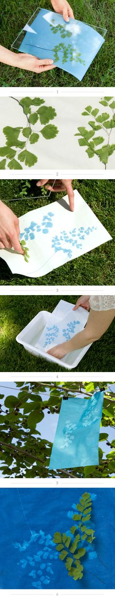 I did photographic sun prints (i.e.cyanotype) in my alternative processes class and LOVED it!!!  How-To: Create a Sunprint in The BULLETIN at Terrain