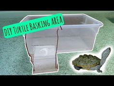 TURTLE BASKING AREA - DIY | Cheap and Easy! - YouTube