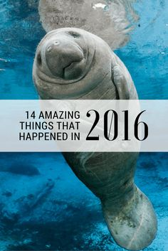 2016 wasn't all bad, promise!