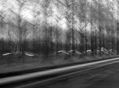 Lange blootstelling dromerige licht spelen snelheid auto's