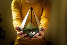 Plante aeriene: tot ce ai nevoie să știi - Greenarium Plants, Plant, Planets