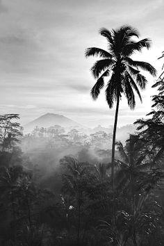 Just. Bali.