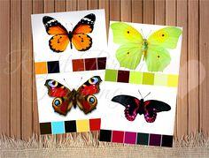 Színes a paletta. Pillangók - Sport fejlesztési RightBrain.Training gyermekek