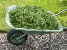 Mulching With Grass Clippings: Can I Use Grass Clippings As Mulch In My Garden - Can I use grass clippings as mulch in my garden? Certainly. Mulching with grass clippings, either on the lawn or in the garden bed, is a time honored method which enhances soil, prevents some weeds and preserves moisture. Click here for more info.