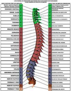 Fitness About Me Acupressure, Acupuncture, Ear Reflexology, Hata Yoga, Medicine Notes, Spine Health, Medical Anatomy, Circulation Sanguine, Body Anatomy