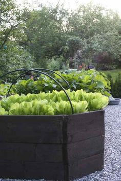 raised planters box
