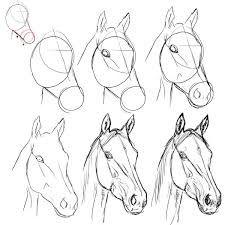 Image result for paarden tekenen stap voor stap