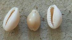 Coquillages, perles de nacre  #supplementsdame, #mercerie, #perlerie, #rennes