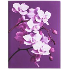 Graham & Brown Purple Orchid Canvas Print ($86) ❤ liked on Polyvore featuring home, home decor, wall art and purple