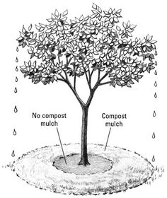 """So happy to know you are putting this information out there. I see trees dying all up and down the east coast from """"volcano mulching."""" A tree breathes from the flare and burying it with mulch actually suffocates it - ouch! Edible Landscaping, Plants, Fruit Trees, Organic Mulch, Garden Shrubs, Compost, Compost Mulch, Trees To Plant, Tree Mulch"""