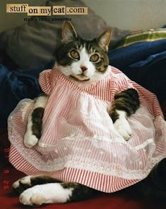 Dressing up the cats in baby clothes. Especially the booties that tied on -- Good times!