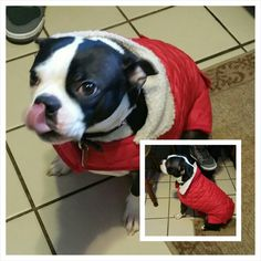 Millie Vanillie with her new coat!
