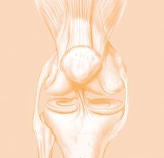 Collagen for Joint Pain Our Body, Arthritis, Human Body, Collagen, Natural Health